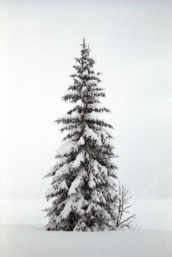 15-colgadas-de-una-percha-december-mood-board-diciembre-inspo-inspiracion-inspiration-3