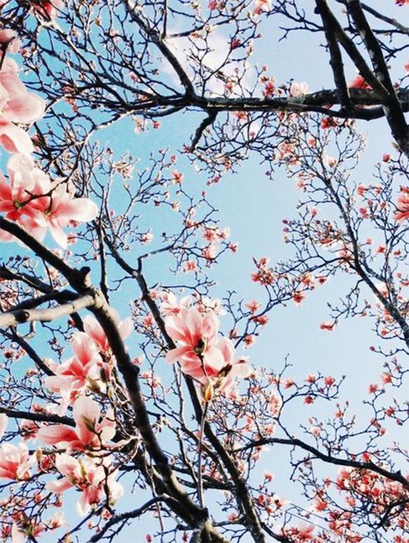 15-colgadas-de-una-percha-march-mood-board-inspiration-inspiracion-marzo-inspo-35
